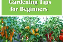 biginner tips to make a garden
