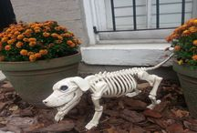 #Halloween in #Washington,DC / Halloween ghosts and goblins from stylish Georgetown to elegant Embassy Row-Kalorama!