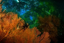Some Underwater Photos / Most of these photos were taken in Raja Ampat, West Papua.