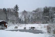 Natural swimming pond through the year / A look at Natural Swimming Ponds through the year.