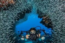 In The World Of Underwater Photography