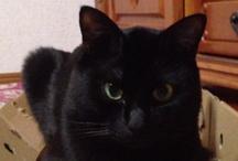 My cat. / His name is Chibi!