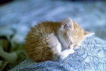 Mon petit chat