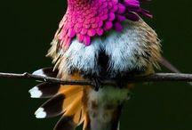 Bird/Madarak