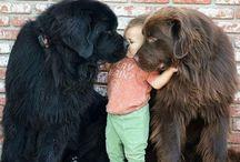 Animals ♥️