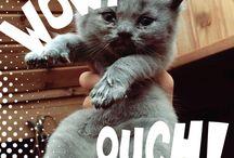 Lili je kočka, cat