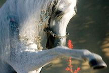 Horses / He saw something was missing...- something that represents His patience, His grace, His love, His beauty, His spirit, His strenght, His speed, His understanding, His everything... - Indeed all that was good - and He created the horse..*