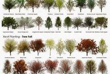 plants color