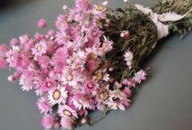 Droogbloemen / Prachtige collectie vintage droogbloemen, gedroogde bloemen, gedroogde Lavendel en exclusieve boeketten bij Juffrouw Jans!