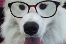 Doggie Puppy
