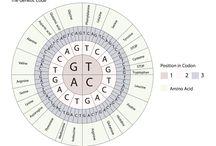 science genes