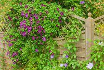 MT Garden Design