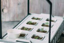 Anbau mit dem IKEA Hydrokulturset / In unserem Büro haben wir den Selbstversuch gewagt: Salat anbauen mit dem Hydrokulturset KRYDDA/VÄXER von IKEA. Das Ergebnis siehst du hier!
