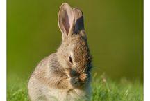 Animals Bunny / Rabbit / Hare / by Frieda Hoppen