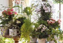 Flores e plantas na decoração