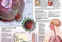 Understanding HIV