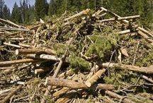Biomass and Bioenergy News