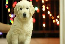 How A Simple Video Increased A Dog Food Startup's Sales By 50%