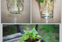 Tuin en plantjes