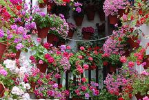 Flowers and gardens