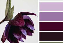 {Inspirations} - Color Palette