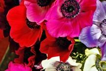 花のテキスタイル資料