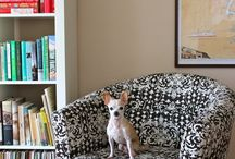 Apartments for Pets / For the little furry ones we share our lives with.