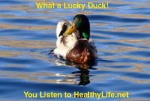 Lucky Duck Pictures / HealthyLife.net Radio's fun duck picture campaign