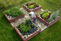 Gardening  / by Tracy Buckingham-Hayes
