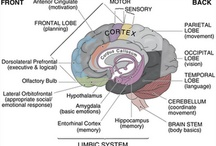 Neurocognitive Teaching and Learning / by Risha Jones