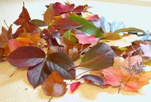 Preserving- crafty / Preserving or drying leaves
