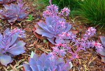 Gardens / Water wise Gardening