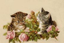котики, γάτες, cats.