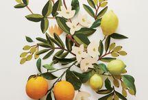 botanicals / by Kathryn Grady