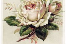 Roses anciennes... Vintage roses