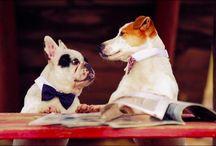 mascotas / animales y mascotas, animals and pets