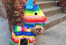 Dog costumes / Great ideas for dog costumes.  For Halloween, parties, holidays and more! / by Jenna Z