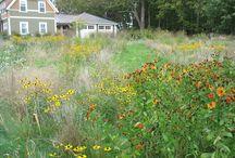Działka ogród