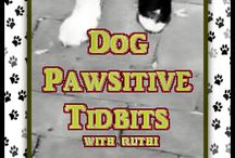 Dog Pawsitive Tidbits