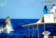 Whale Watching Dominican Republic