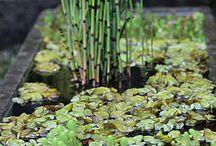 water garden & landscape