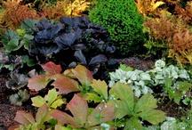 Fine Foliage / by ~ Della Terra ~