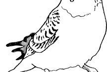 ameno ポートフォリオ / おなじみの動物から、少しマニアックな動物まで。 色々な動物を描いてます。