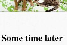 Animals LOL