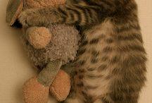 Gattini / immagini tenere di micini