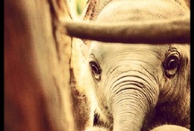 elephant / my favorite