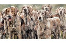 Debbie Boon / Truly stunning collection of artworks by Wildlife Artist - Debbie Boon