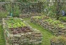 Jardin potager / Jardin potager
