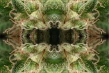 WeedPorn