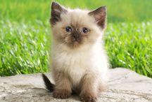 Обожаю котиков / Милые фотки котят и взрослых кошек